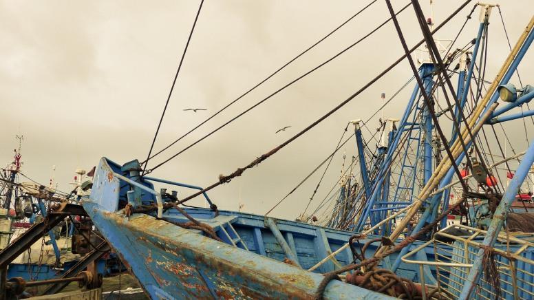 Dal deserto al porto di Agadir dove ogni giorno si vendono tonnellate di Sardine.